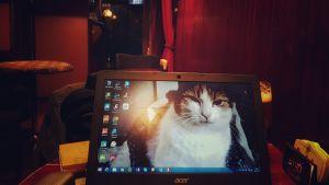 dator med kattbild på krog som är sunkig, rustik