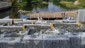 Vatten som forsar i fiskvägar vid en å. Personer längre bort som ser på vattnet.