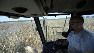 En amerikansk jordbrukare skördar majs i Georgia.