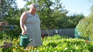 Susanne Gustafsson vattnar sin sallad en solig dag i trädgårdslandet som är anlagt i pallkragar.
