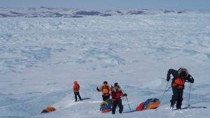 Fyra personer skidar på Grönland. De släpar pulkor efter sig. De skidar upp för en brant och det ser tungt ut. I bakgrunden syns stora drivor av snö.