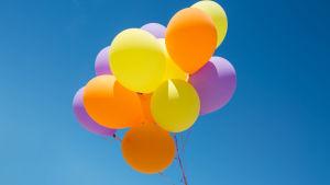 Ett knippe ballonger i olika färger.