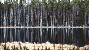 Järvimaisema Seitsemisen kansallispuistossa.