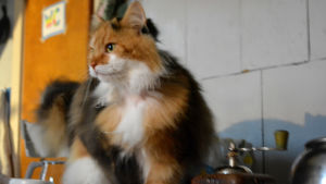 Katten Tania har hoppat upp på spisen bredvid kaffekvarnen.