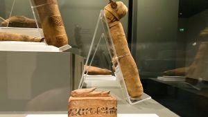 En mumifierad fisk och kattmumier utställda på Amos Rex.