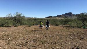 Frivilliga vandrar genom ödsligt ökenlandskap vid gränsen mellan Mexiko och USA: