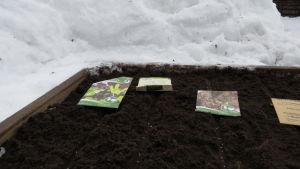 Rader med frö som satts i jorden i en odlingslåda på vintern.