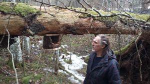 En fågelholk med stor öppning upphängd på ett omkullfallet trä, dock drygt en och en halv meter från marken.