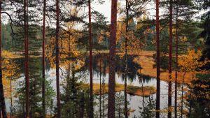 En höstig bild tagen uppe på ett berg. I bilden syns löv som är gula och orange och utsikten är över en liten sjö.