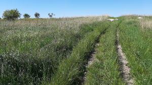 Böljande gräs och himmel
