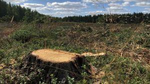 en trädstubbe