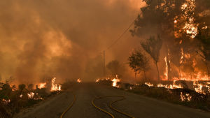 Skogsbrand i Portugal.