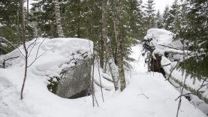 En stor sten i en skog. Det är mycket snö på marken och på stenen.