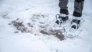 Älgpäls i snön.