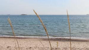 gräs och hav