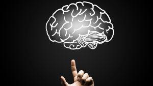 Ett finger pekar upp mot en tecknad hjärna.