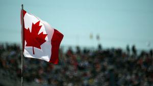 Kanadas flagga vajar i vinden.