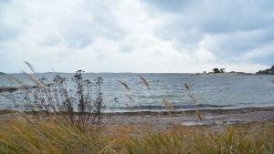 Utsikt från stranden i Hangö där vågor rullar in.