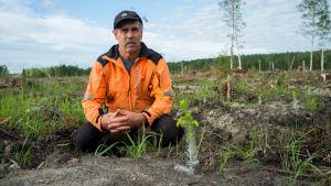 Björn Josefsson sitter på huk vid en granplanta på ett kalhygge i Hammarland, Åland.