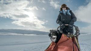 Emilia Laitinen ja Äijä-koira valjakkoajelulla.