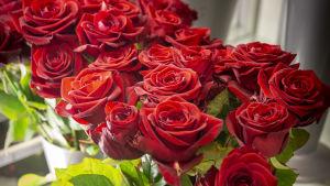 Ruusuja kukkakaupassa.