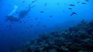 Dykare vid korallrev