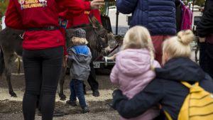 Sirkus Finlandian väliajalla pihalla on aasiratsastusta. Jonossa lapsi ja äiti katsovat, kun on seuraavan lapsen vuoro ja lapsi lähestyy aasia.