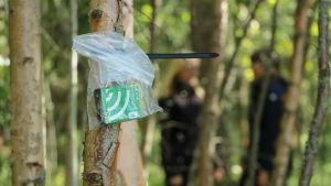 En ultraljudsmottagare fastspännd i ett träd.