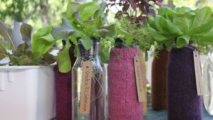 Flaskor med sallads- och örtodlingar.