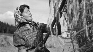 Författaren Sally Salminen i skördearbete i Sibbo i augusti 1941.