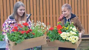 Susanna Toivonen och Liina Korte står med lådor med blommor i händerna.