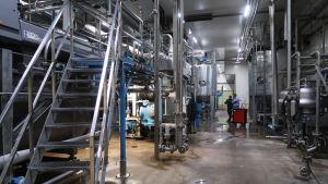 Rostfria tankar i en fabrikshall för rening av strömming till fiskfoder.