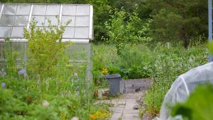 Ett växthus och utanför en massa växter, mest grönsaker, någon enstaka blomma. Sommar.