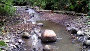 En å med lågt vatten.