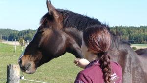 Bild av en flicka med ryggen vänd mot kameran. Hon klappar en brun häst.
