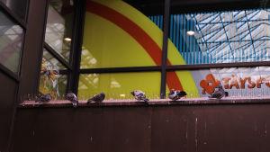 Duvor som sitter på rad på ett tak.