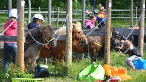Ponnyer och lägerdeltagare på rad. Ponnyerna selas.