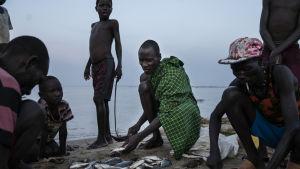 Då kampen om fiskarna hårdnar fiskas det för små fiskar. Tilapiafiskarna på bilden får man bara en kenyansk shilling för om man säljer den vidare. Det motsvarar under en cent.