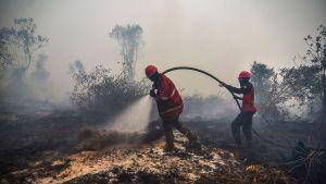 Brandhärjat område med två brandmän som håller på med släckningsarbete.