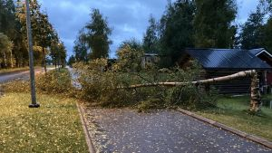 Ett träd har fallit över vägen.