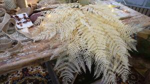 En bunt med blekta läderblad, en sorts ormbunksblad, som används för buketter och dekorationer.