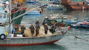 I Hongkong har en del yrkesfiskare börjat fiska med traditionella, ekologiskt hållbara metoder. Det anses inge hopp om en bättre framtid för haven.
