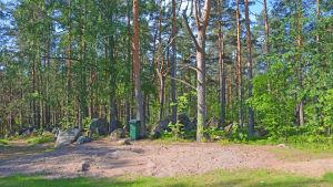En tallskog med ett tomt område med sand framför sig.