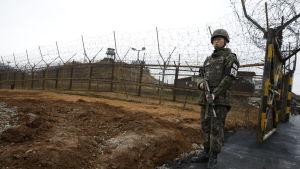 Soldat vid Sydkoreas gräns i Cheorwon. Soldaten vaktar gränsen mellan Sydkorea och Nordkorea.
