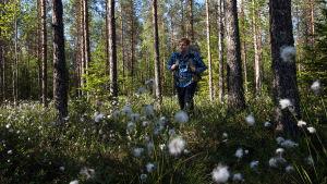 Kimmo Ohtonen kävelee metsässä tupasvillojen kukkiessa