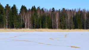 Fågelmatning på Kodderviken i Borgå