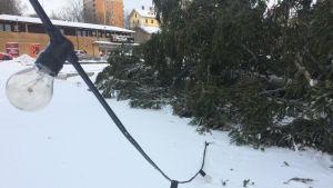 Julgranen på torget i Dalsbruk har blåst omkull i en vinterstorm.