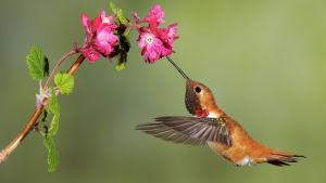 Avara luonto: Luonnon pienet ihmeet