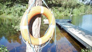 En livboj vid en tall invid en sjö och en lång brygga. Sommar och sol.