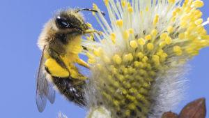ett bi sitter på en blomma.